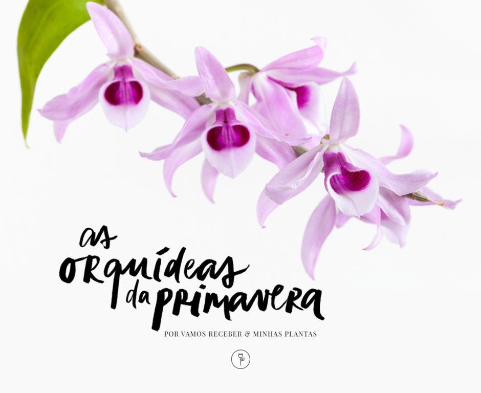 orquídeas da primavera