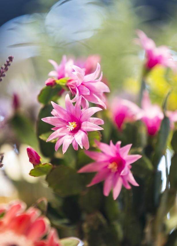 flores para decorar em clima de primavera