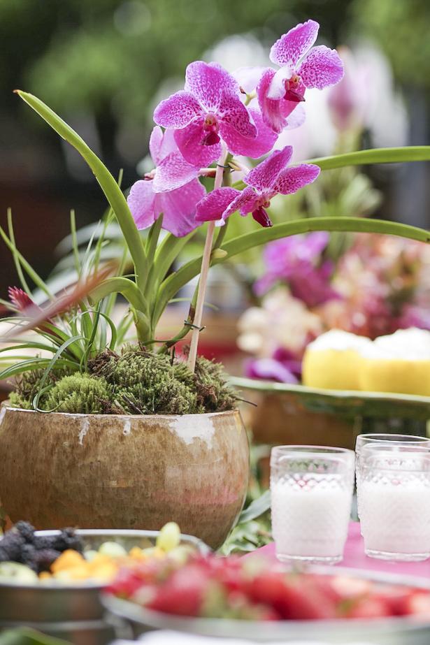 orquídeas rosa em vaso