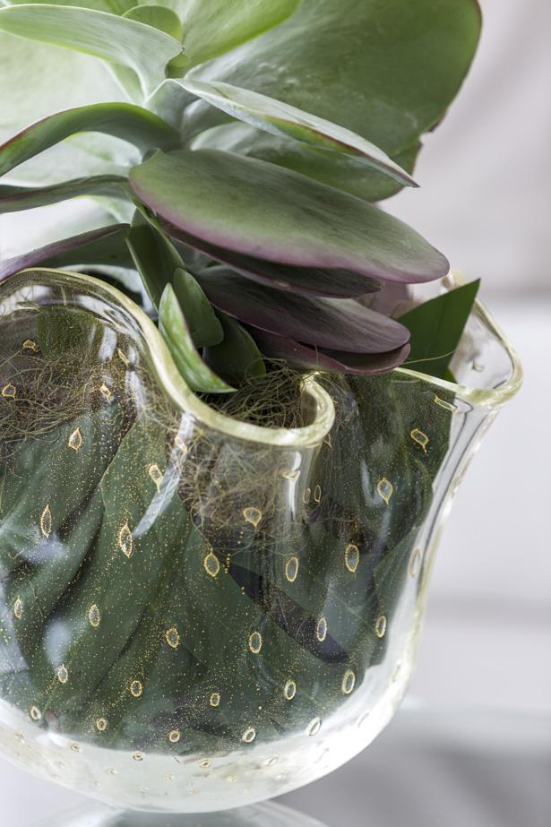 vaso de cristal transparente com suculentas