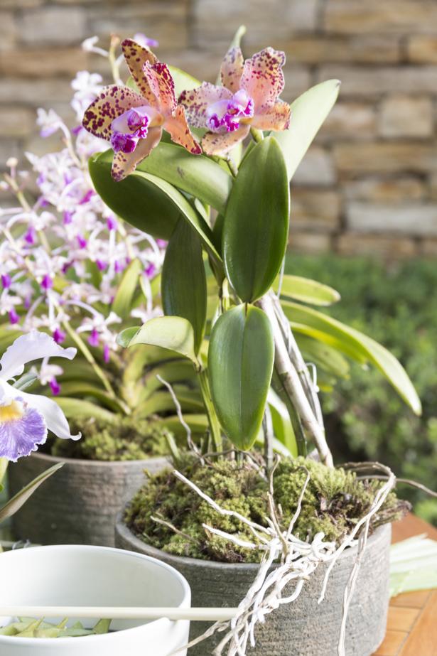 orquídeas milplantas