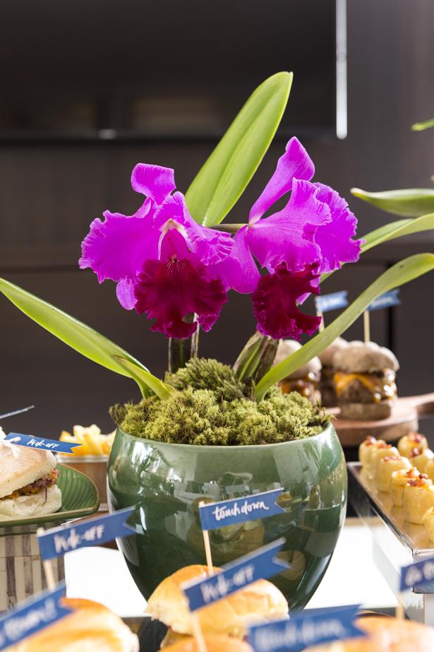 Orquídeas cattleya roxo em vasos rústicos