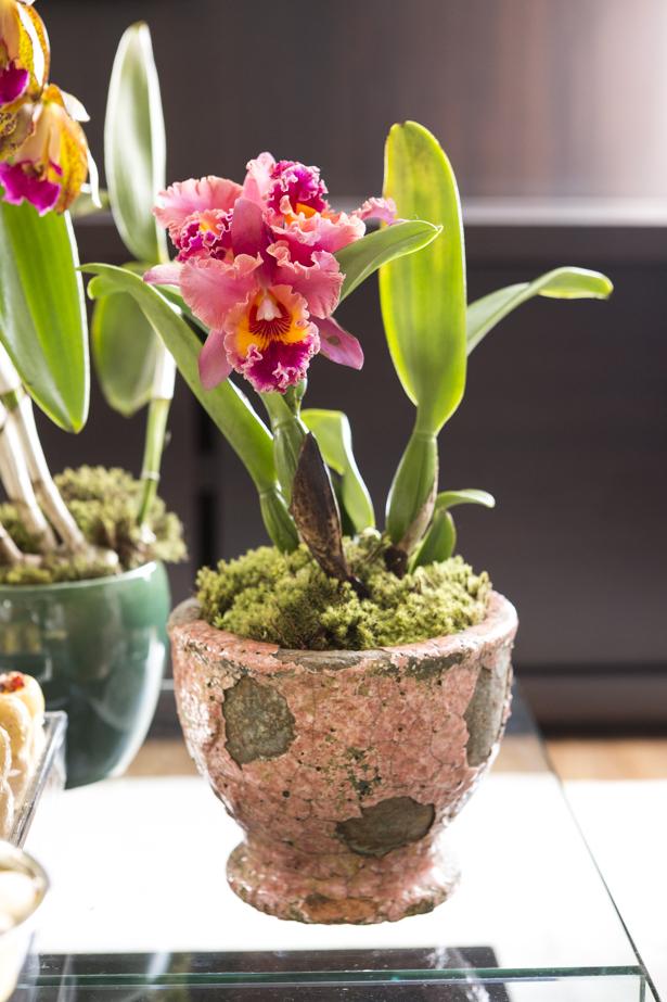 Orquídeas cattleya em tons de rosa no vaso Tania Bulhões