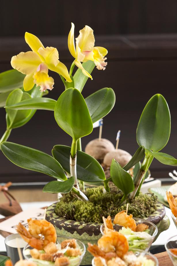 Orquídeas cattleya Milplantas