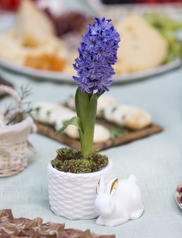 hyacinthus azul em cachepot de cerâmica para Páscoa